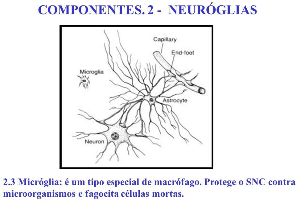 COMPONENTES. 2 - NEURÓGLIAS