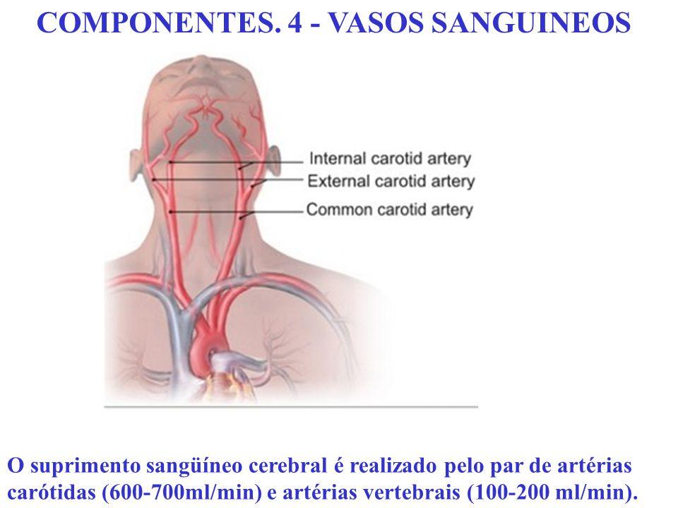 COMPONENTES. 4 - VASOS SANGUINEOS