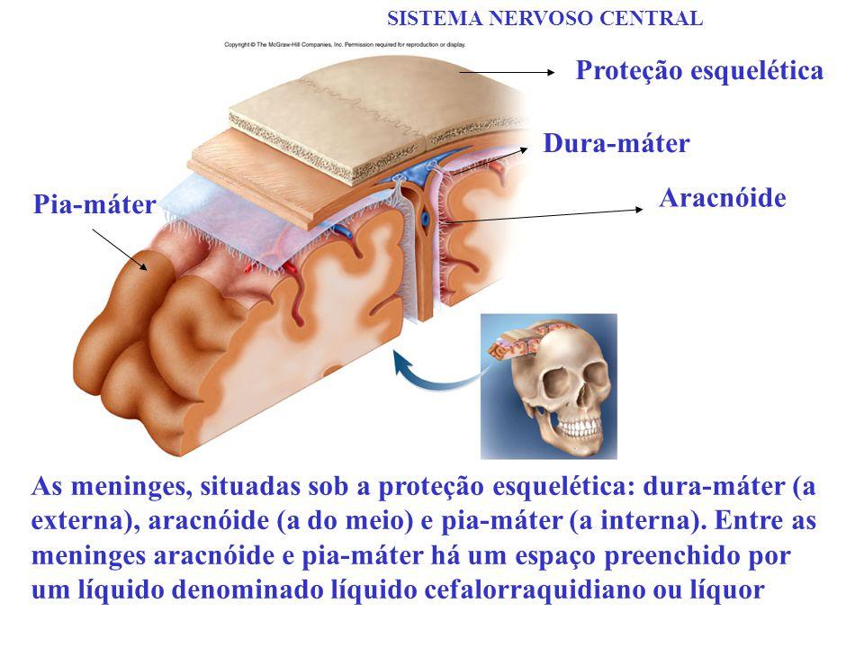 Proteção esquelética Dura-máter Aracnóide Pia-máter