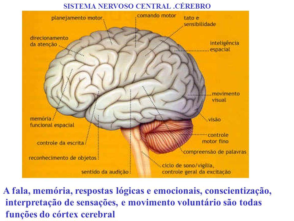 A fala, memória, respostas lógicas e emocionais, conscientização,