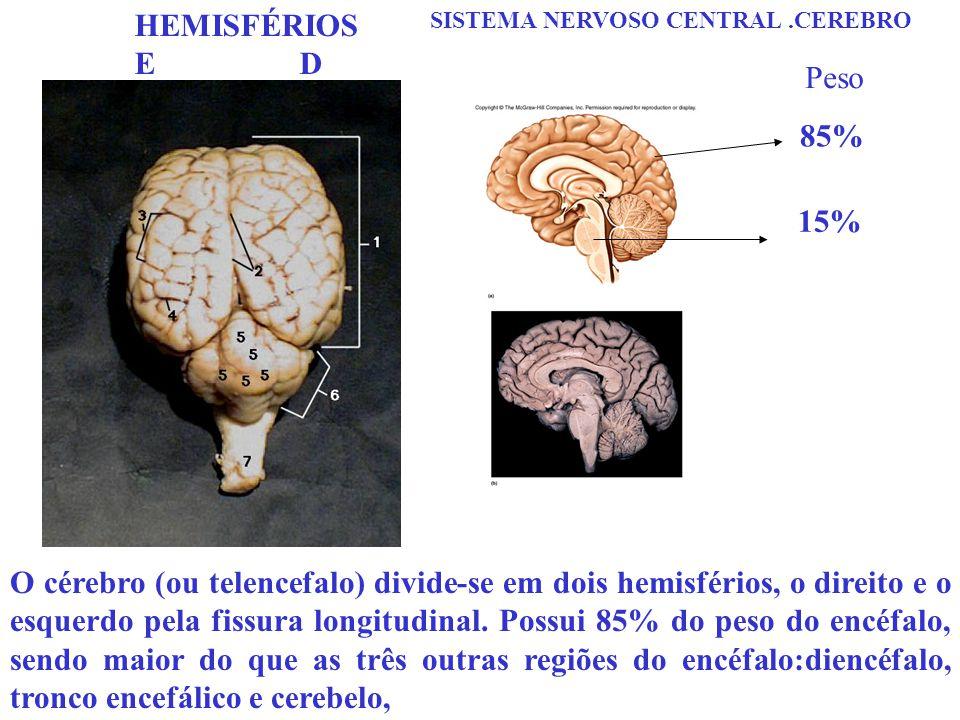 HEMISFÉRIOS E D. SISTEMA NERVOSO CENTRAL .CEREBRO. Peso. 85% 15%