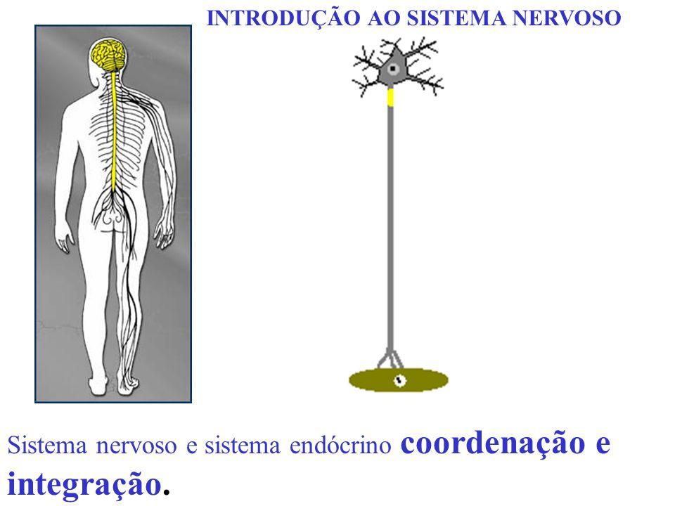 Sistema nervoso e sistema endócrino coordenação e integração.