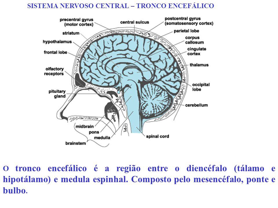 SISTEMA NERVOSO CENTRAL – TRONCO ENCEFÁLICO