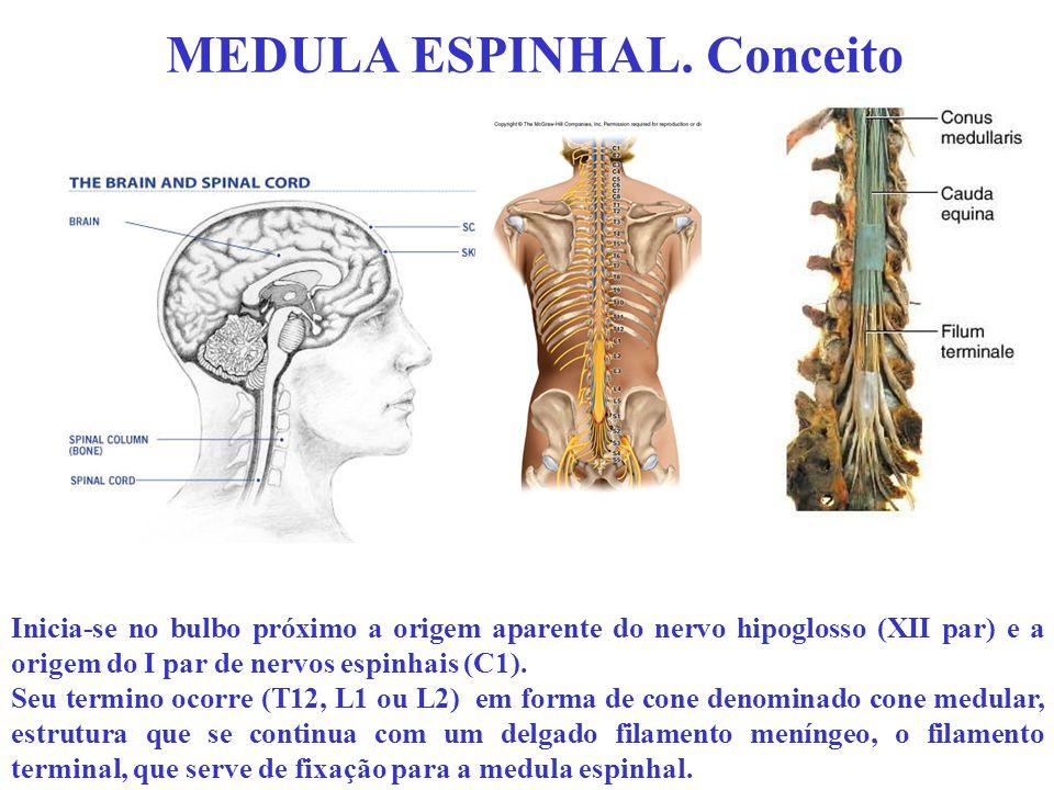 MEDULA ESPINHAL. Conceito