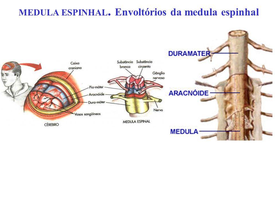 MEDULA ESPINHAL. Envoltórios da medula espinhal