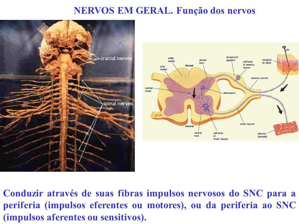 NERVOS EM GERAL. Função dos nervos