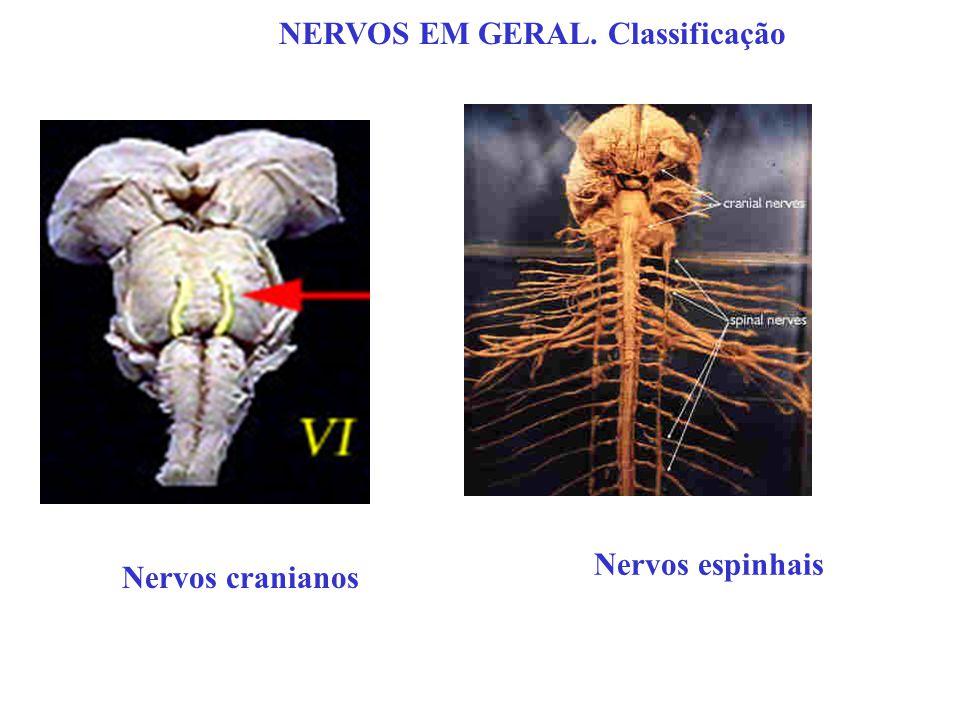 NERVOS EM GERAL. Classificação