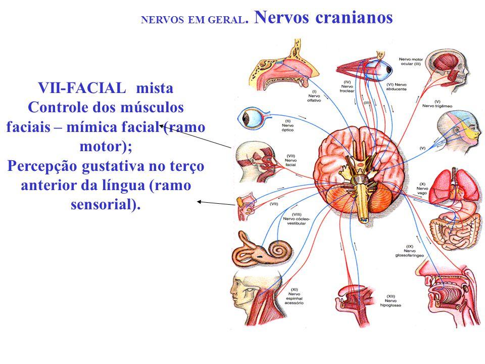 NERVOS EM GERAL. Nervos cranianos