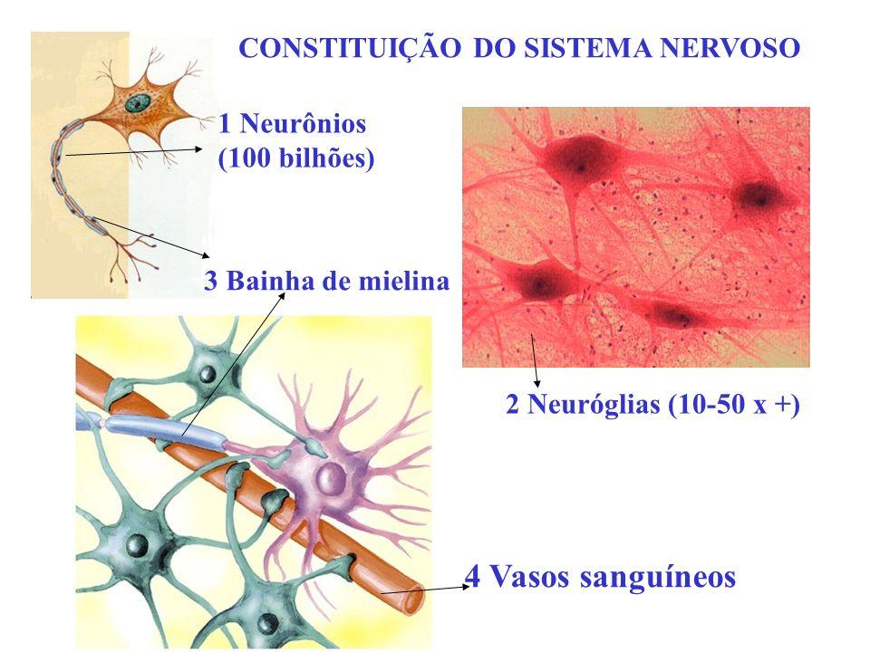 4 Vasos sanguíneos CONSTITUIÇÃO DO SISTEMA NERVOSO 1 Neurônios