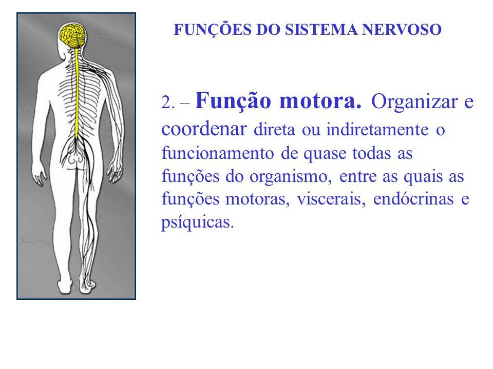 FUNÇÕES DO SISTEMA NERVOSO