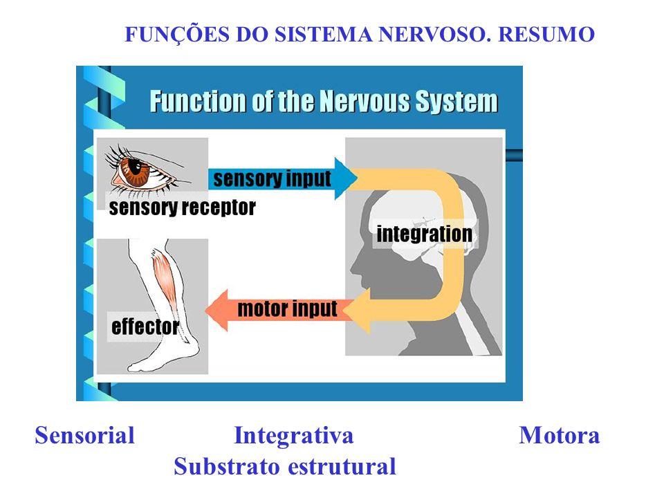 Sensorial Integrativa Motora Substrato estrutural