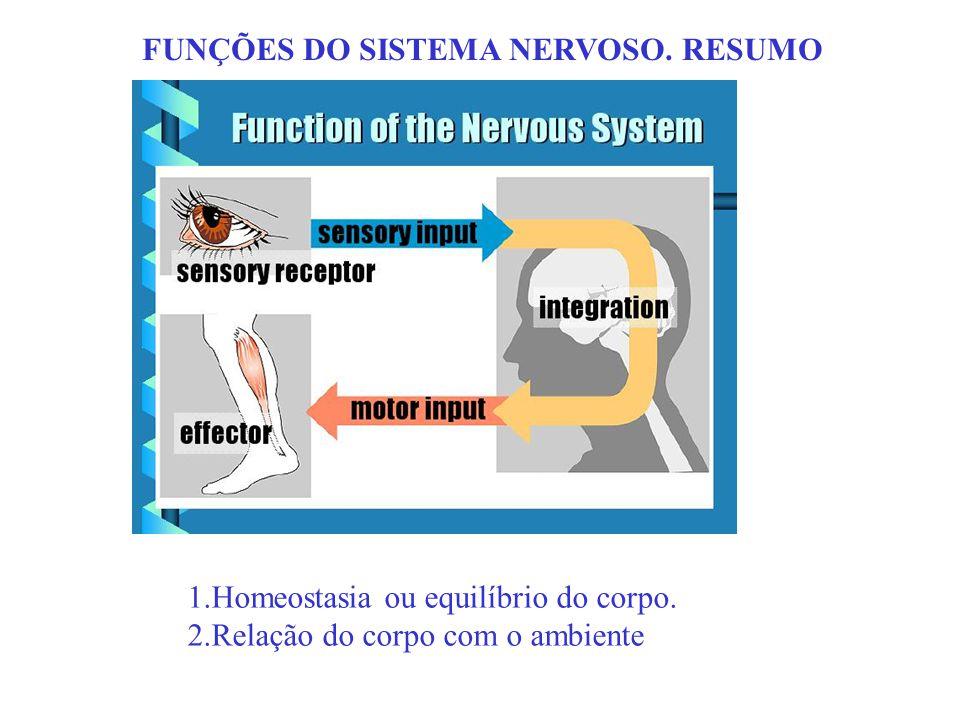FUNÇÕES DO SISTEMA NERVOSO. RESUMO
