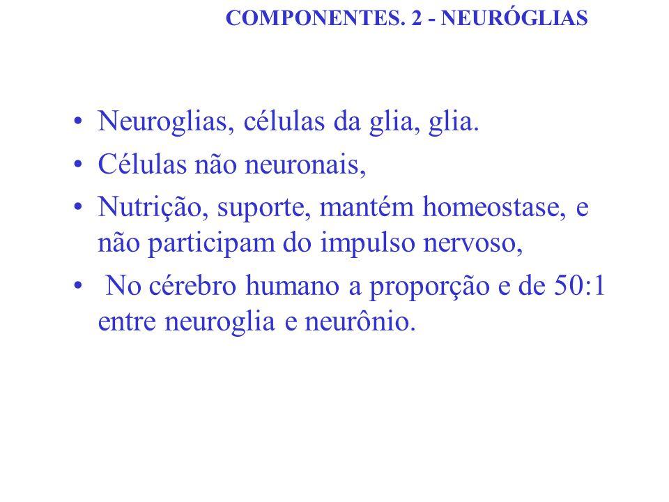Neuroglias, células da glia, glia. Células não neuronais,