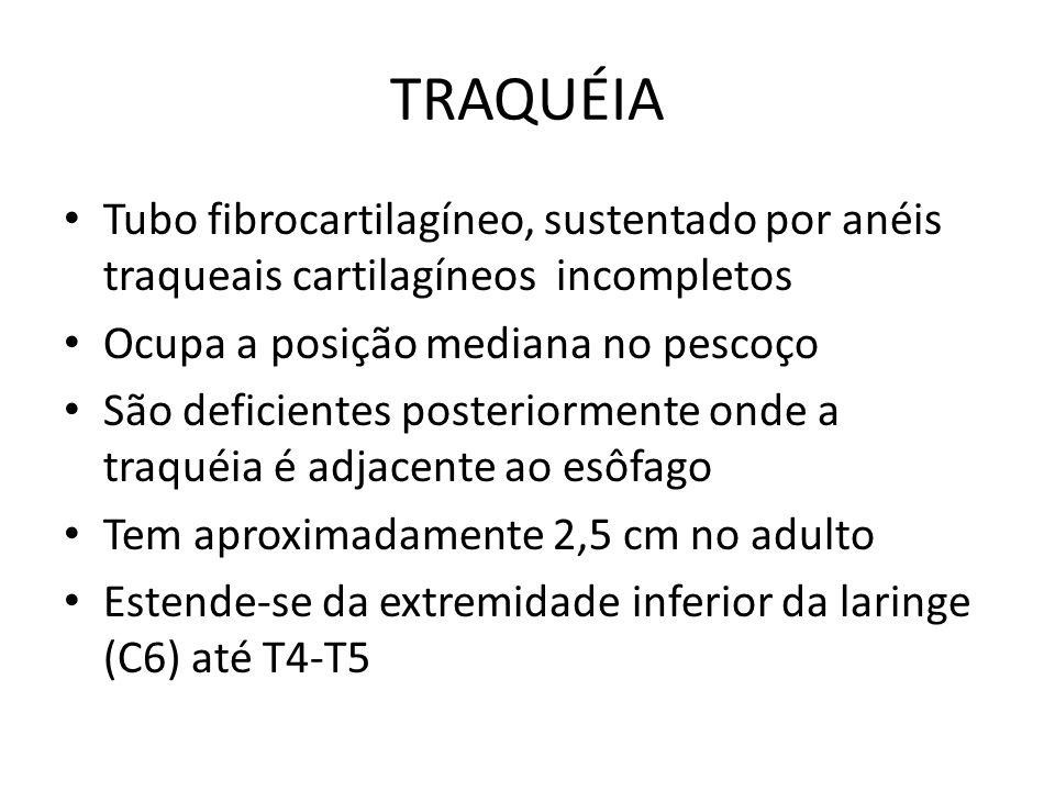 TRAQUÉIA Tubo fibrocartilagíneo, sustentado por anéis traqueais cartilagíneos incompletos. Ocupa a posição mediana no pescoço.