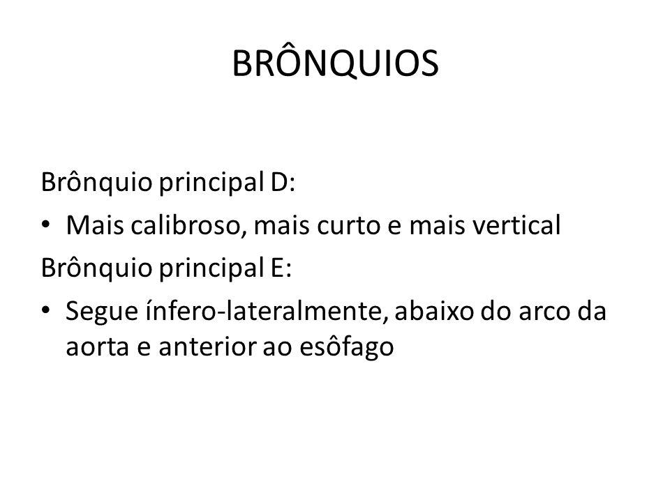 BRÔNQUIOS Brônquio principal D: