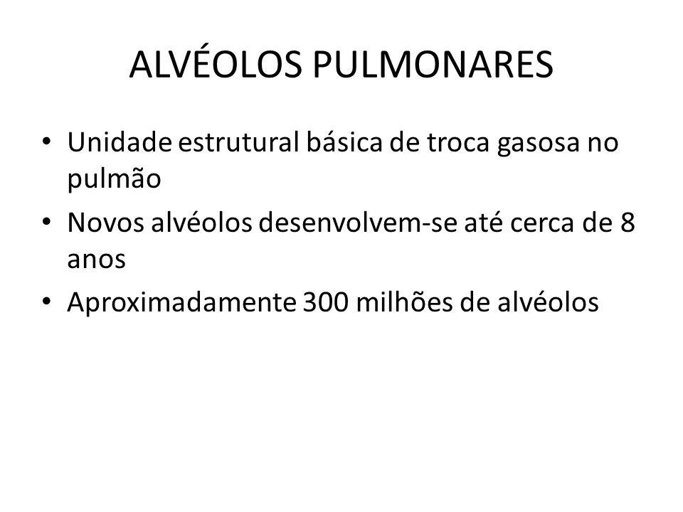 ALVÉOLOS PULMONARES Unidade estrutural básica de troca gasosa no pulmão. Novos alvéolos desenvolvem-se até cerca de 8 anos.