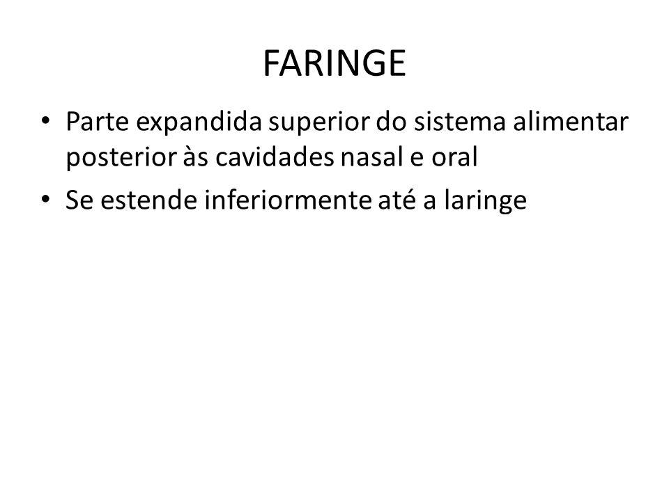 FARINGE Parte expandida superior do sistema alimentar posterior às cavidades nasal e oral.