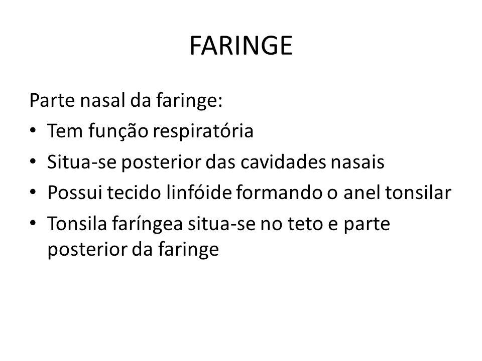 FARINGE Parte nasal da faringe: Tem função respiratória