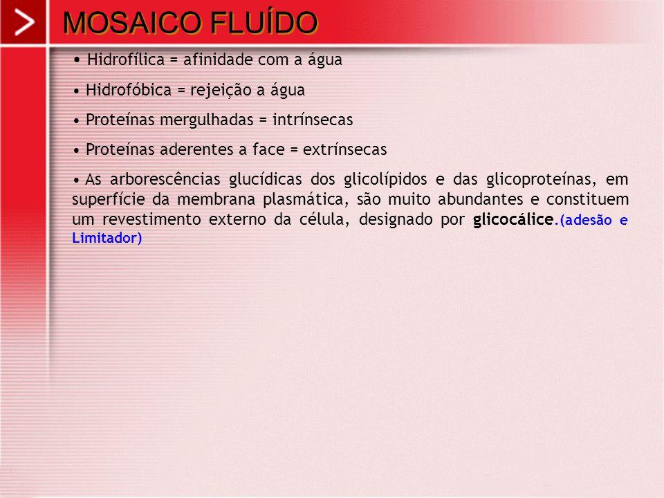 MOSAICO FLUÍDO Hidrofílica = afinidade com a água