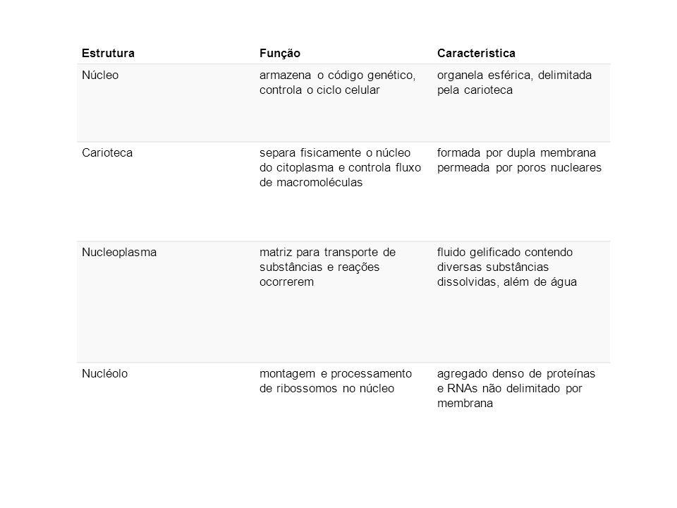 Estrutura Função. Característica. Núcleo. armazena o código genético, controla o ciclo celular. organela esférica, delimitada pela carioteca.