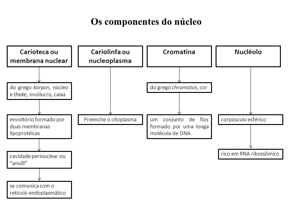 Os componentes do núcleo