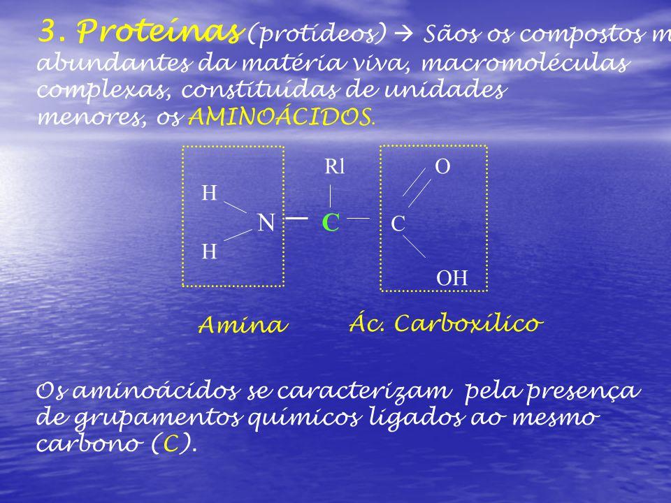 3. Proteínas (protídeos)  Sãos os compostos mais