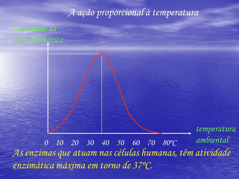 A ação proporcional à temperatura
