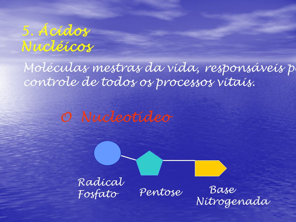 5. Ácidos Nucléicos Moléculas mestras da vida, responsáveis pelo