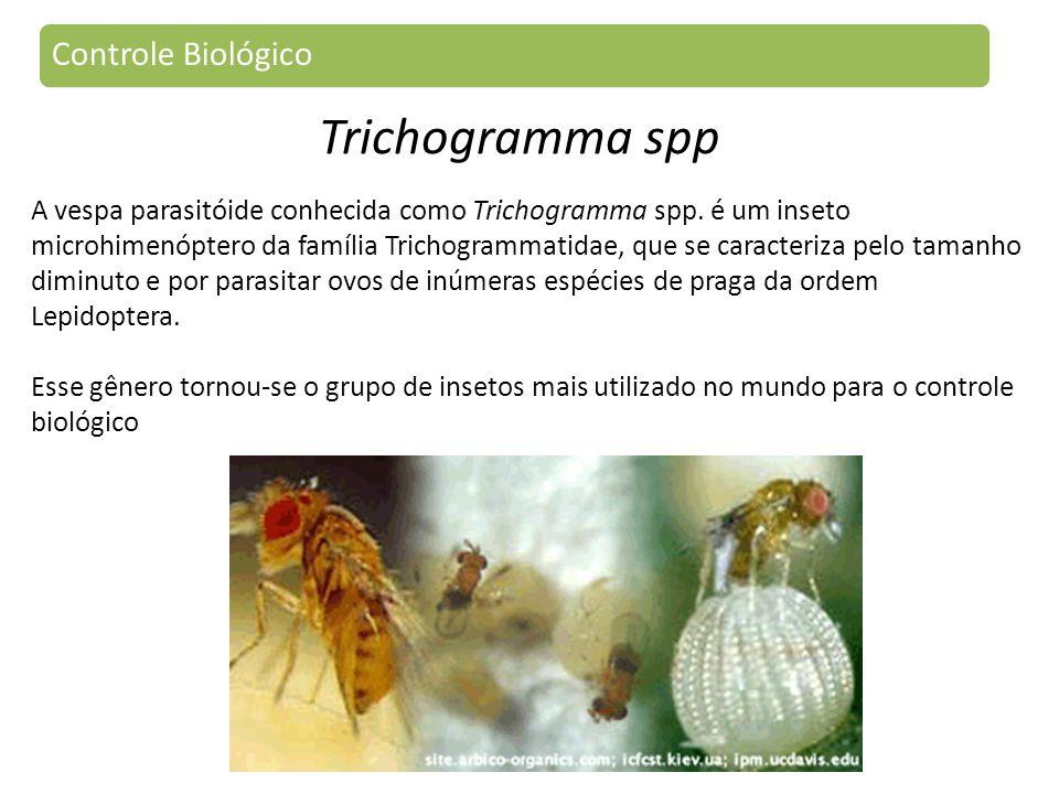 Trichogramma spp Controle Biológico