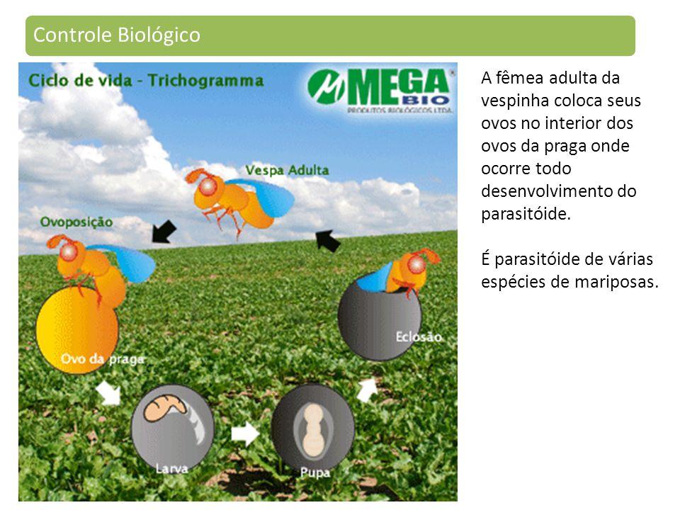 Controle Biológico A fêmea adulta da vespinha coloca seus ovos no interior dos ovos da praga onde ocorre todo desenvolvimento do parasitóide.
