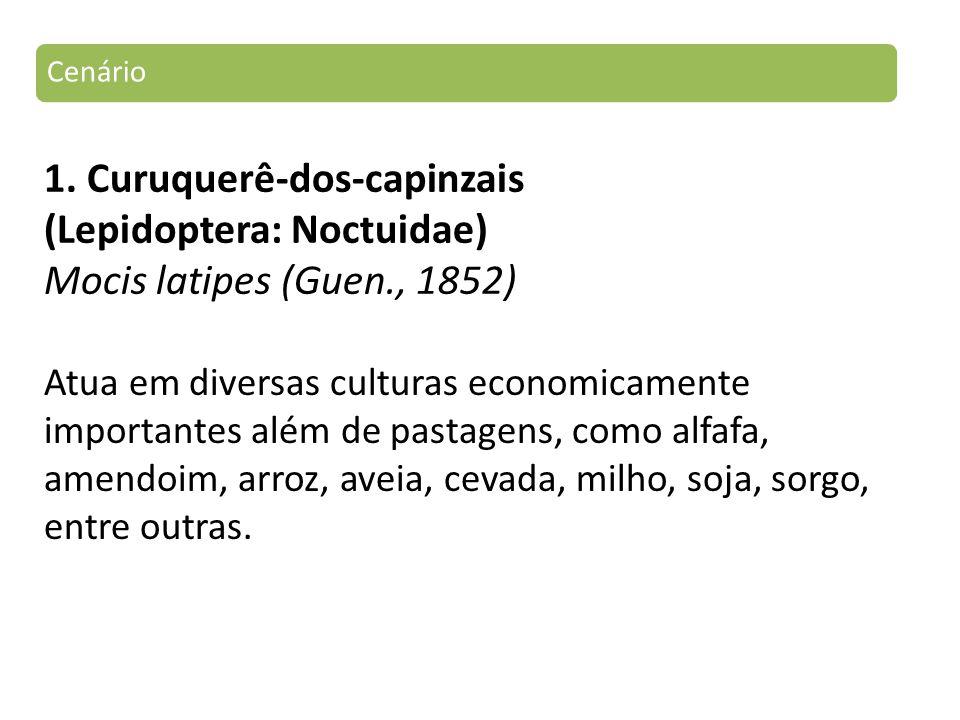 Cenário 1. Curuquerê-dos-capinzais (Lepidoptera: Noctuidae) Mocis latipes (Guen., 1852)