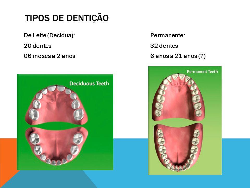 Tipos de dentição De Leite (Decídua): 20 dentes 06 meses a 2 anos