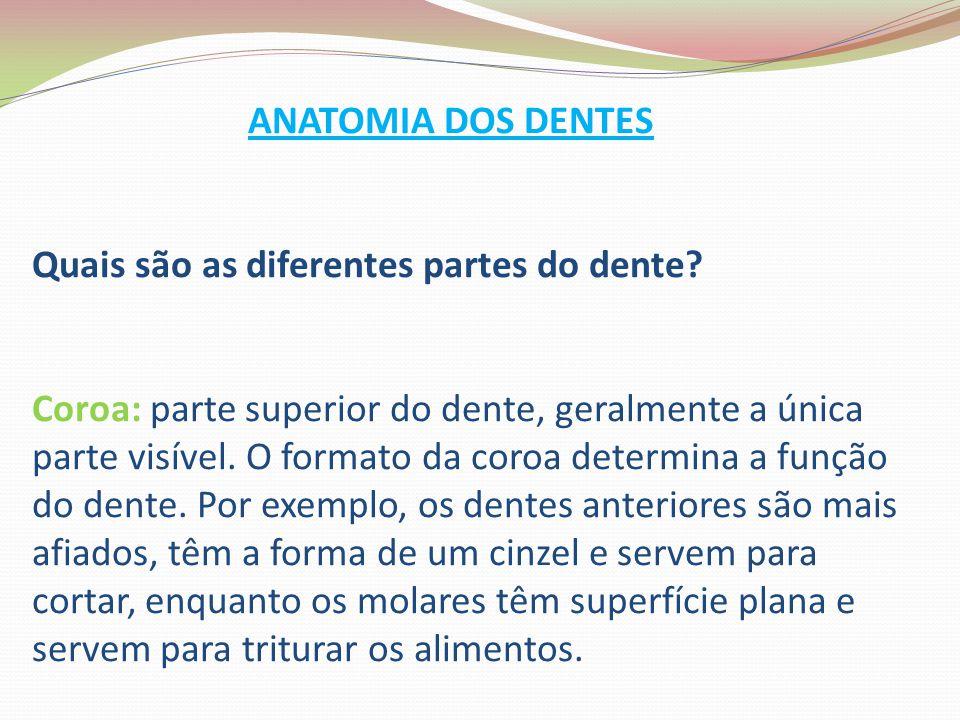 ANATOMIA DOS DENTES Quais são as diferentes partes do dente