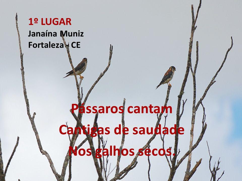 1º LUGAR Janaína Muniz Fortaleza - CE