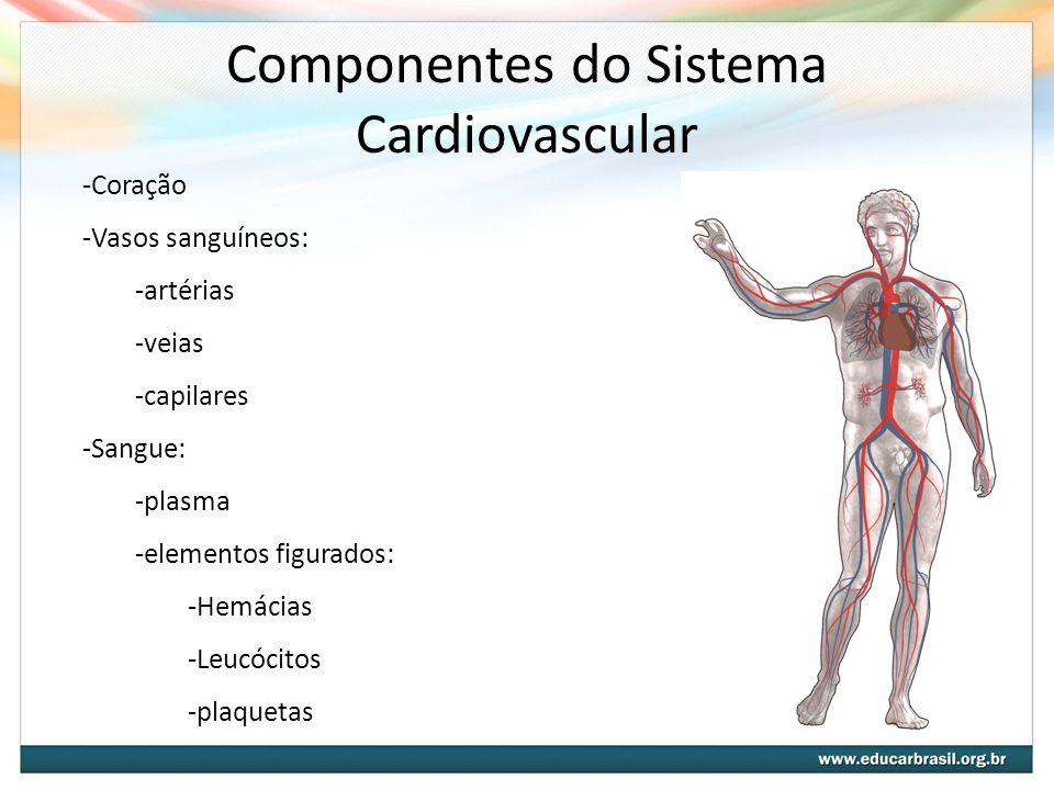 Componentes do Sistema Cardiovascular