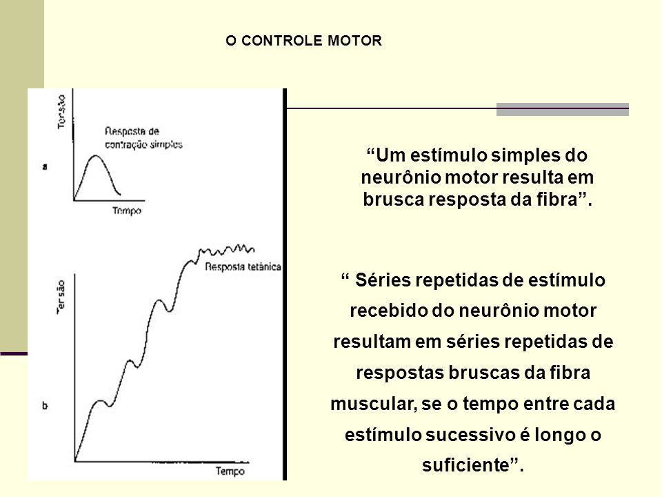 O CONTROLE MOTOR Um estímulo simples do neurônio motor resulta em brusca resposta da fibra .