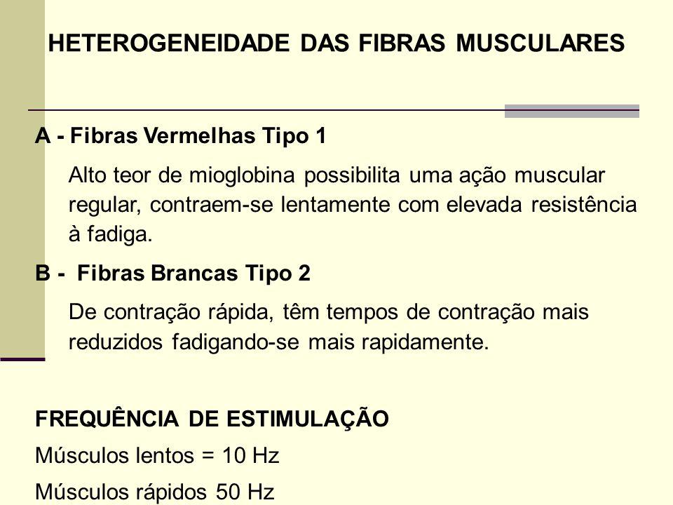 HETEROGENEIDADE DAS FIBRAS MUSCULARES