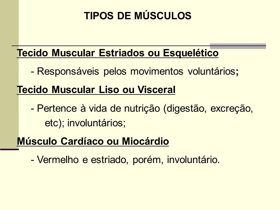 TIPOS DE MÚSCULOS Tecido Muscular Estriados ou Esquelético. - Responsáveis pelos movimentos voluntários;
