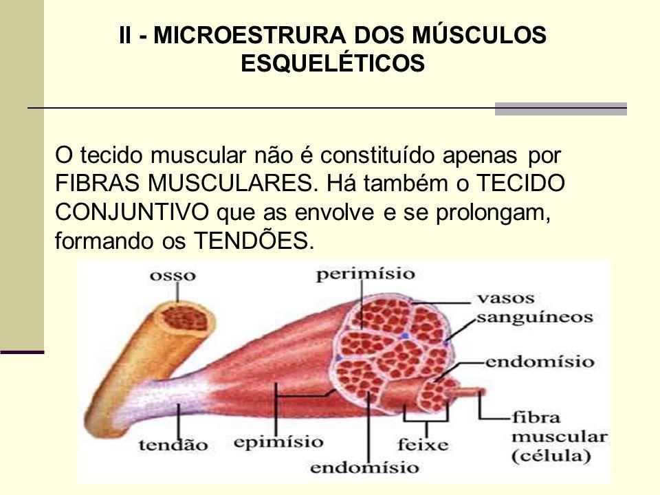 II - MICROESTRURA DOS MÚSCULOS ESQUELÉTICOS