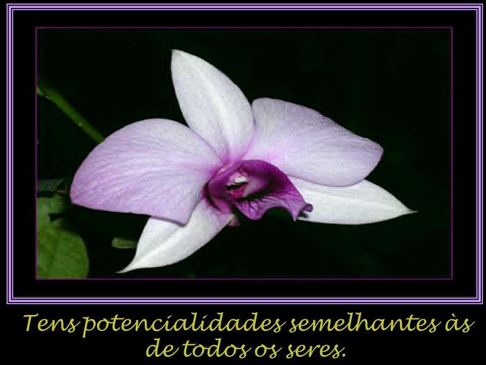 Tens potencialidades semelhantes às de todos os seres.