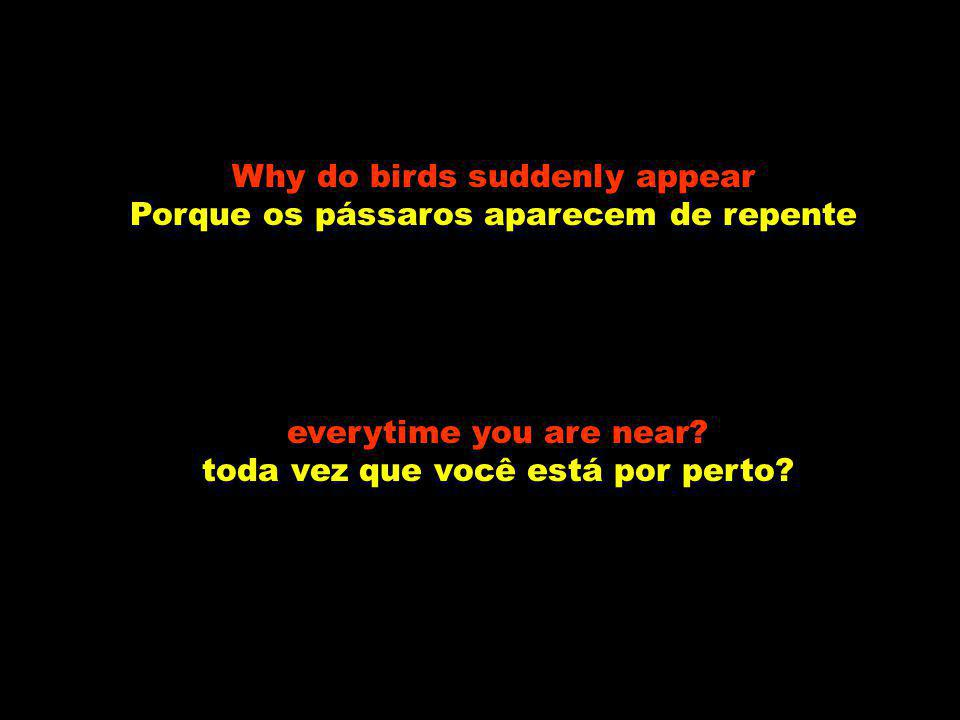Why do birds suddenly appear Porque os pássaros aparecem de repente
