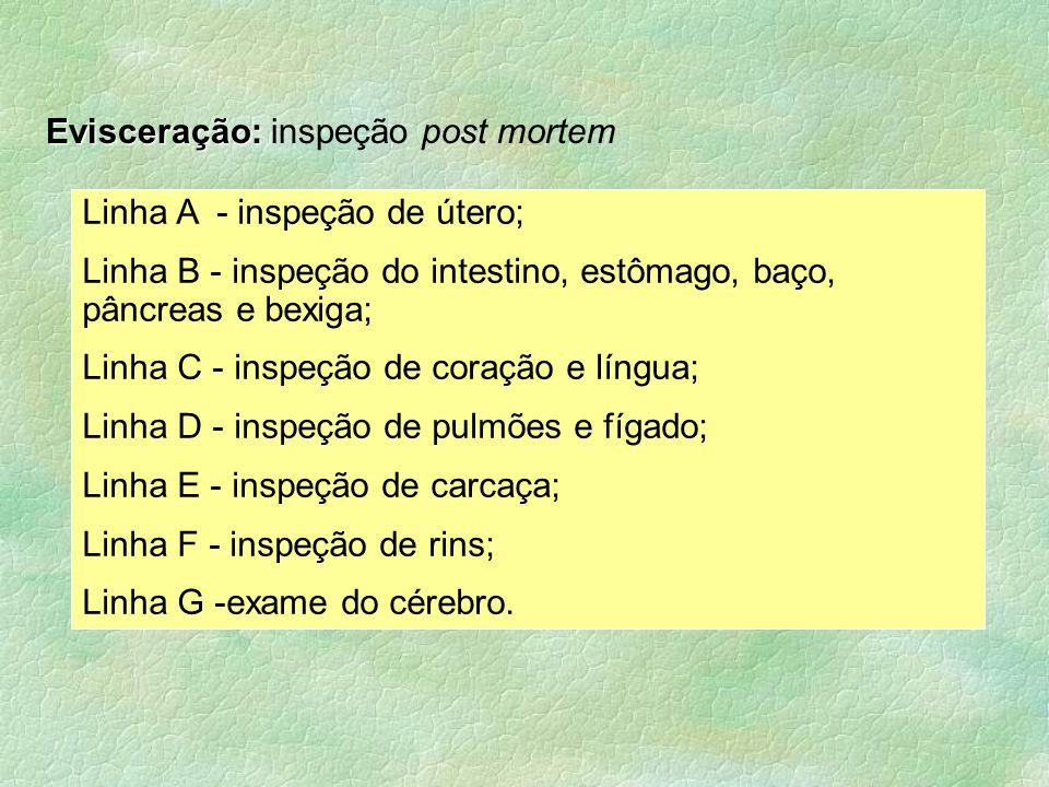 Linha A - inspeção de útero;