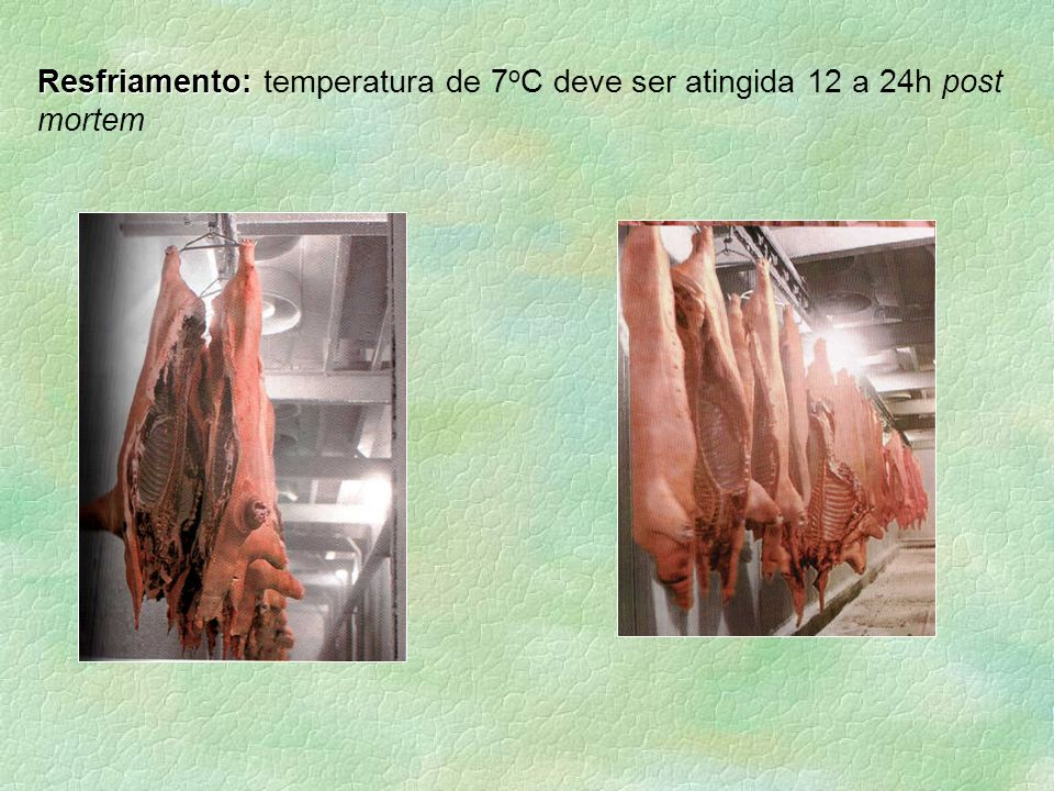 Resfriamento: temperatura de 7oC deve ser atingida 12 a 24h post mortem