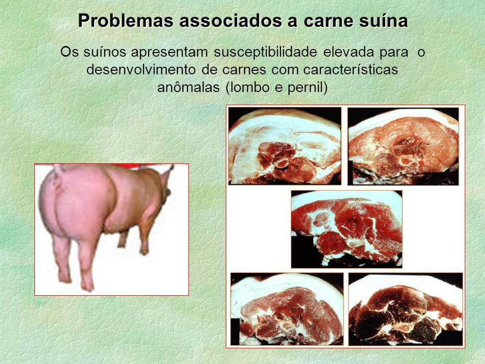 Problemas associados a carne suína