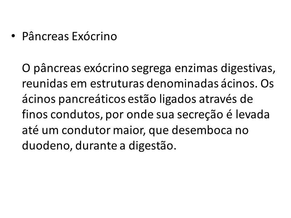 Pâncreas Exócrino