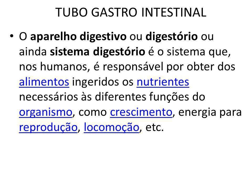 TUBO GASTRO INTESTINAL