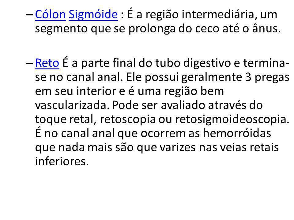 Cólon Sigmóide : É a região intermediária, um segmento que se prolonga do ceco até o ânus.