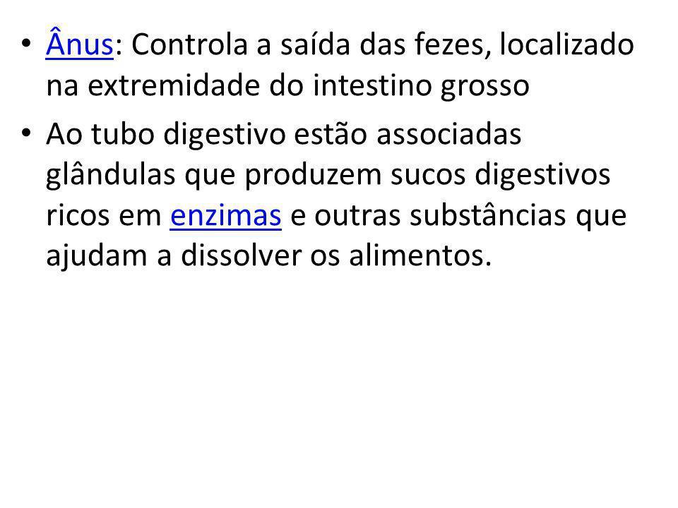 Ânus: Controla a saída das fezes, localizado na extremidade do intestino grosso