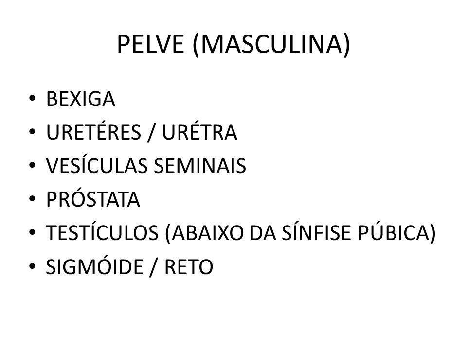 PELVE (MASCULINA) BEXIGA URETÉRES / URÉTRA VESÍCULAS SEMINAIS PRÓSTATA