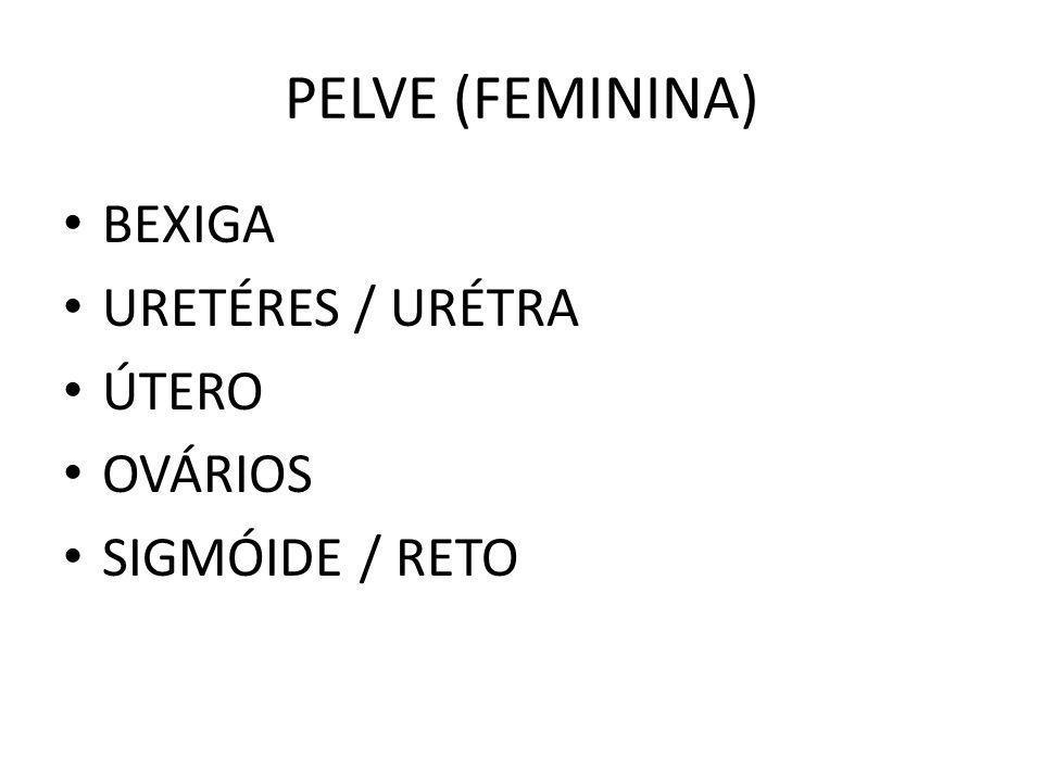 PELVE (FEMININA) BEXIGA URETÉRES / URÉTRA ÚTERO OVÁRIOS